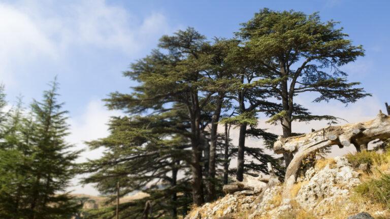'Smart Forest' una iniciativa lanzada en el Líbano