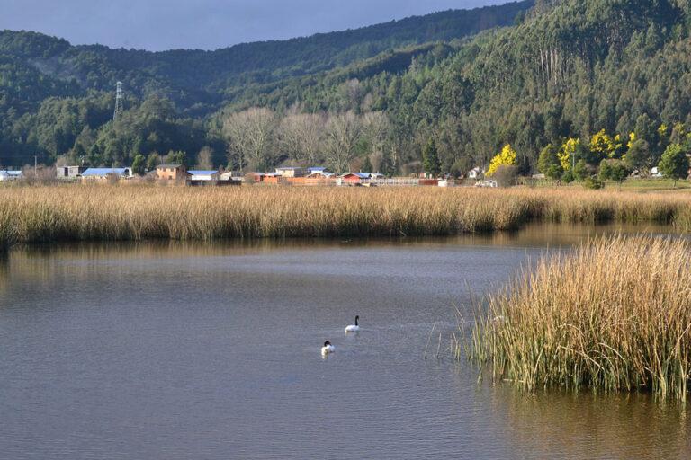 Proyecto sobre monitoreo de aguas urbanas y conservación de humedales es reconocido por la Unión Europea y red chilena Re Acciona por el Clima
